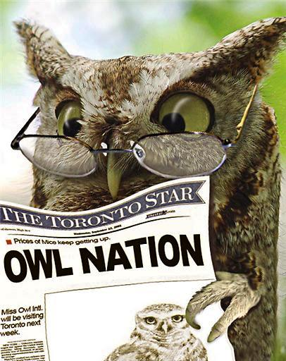 Funny Owl Pic