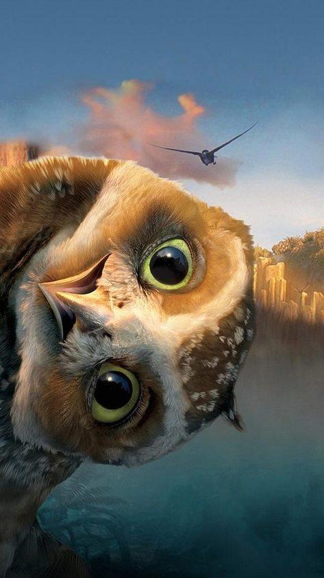 wpid-funny_owl-wallpaper-10531182.jpg